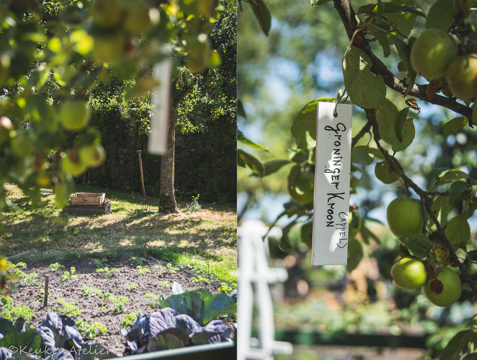 Appelboom Zuiderzeemuseum