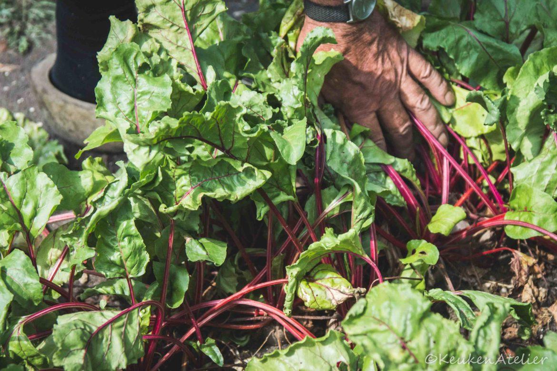 Bieten van tuinman Jos KeukenAtelier.com