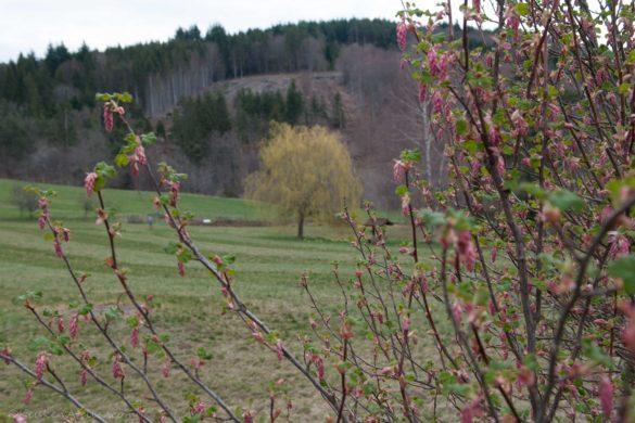 Natuur Auvergne